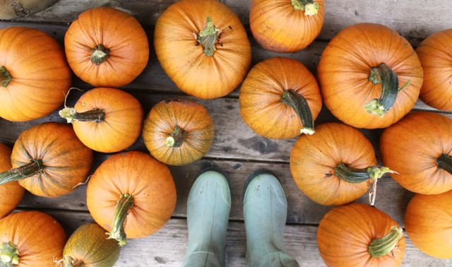 Looking for a Few Pumpkin Inspired Recipes for Fall? Try These!