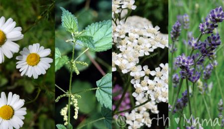 Blog-herb-photo