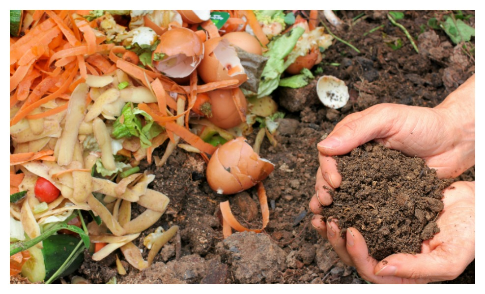 Things You need to know before composting
