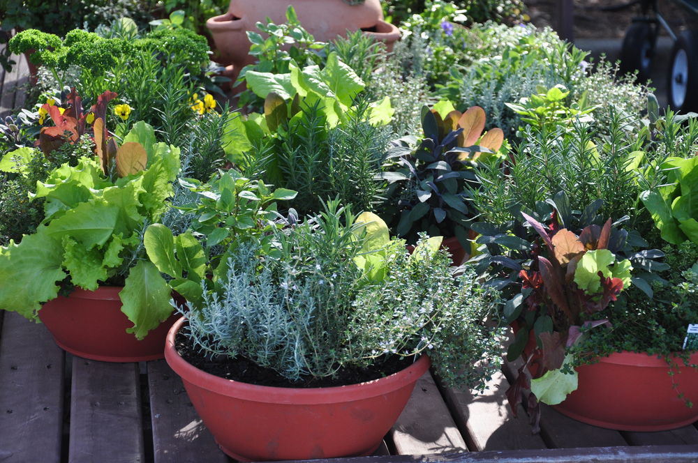 For those with limited space, growing plants in containers lets you grow what you want in the area you have.