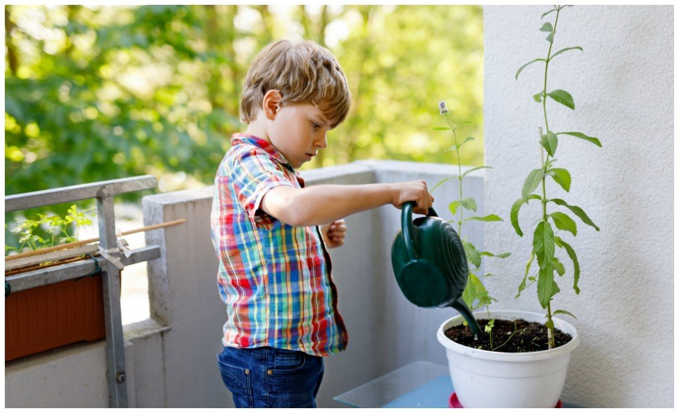 There are some great reasons you'll want to consider a COVID-19 Victory Garden