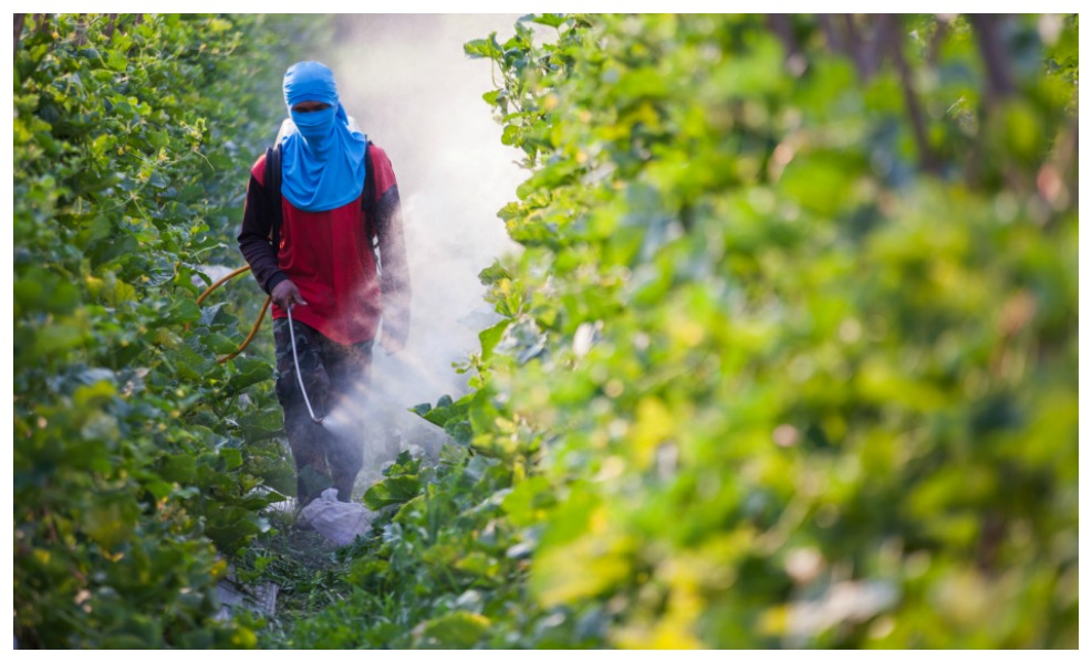 EPA Allows Continued Use Of Toxic Herbicide On Crops