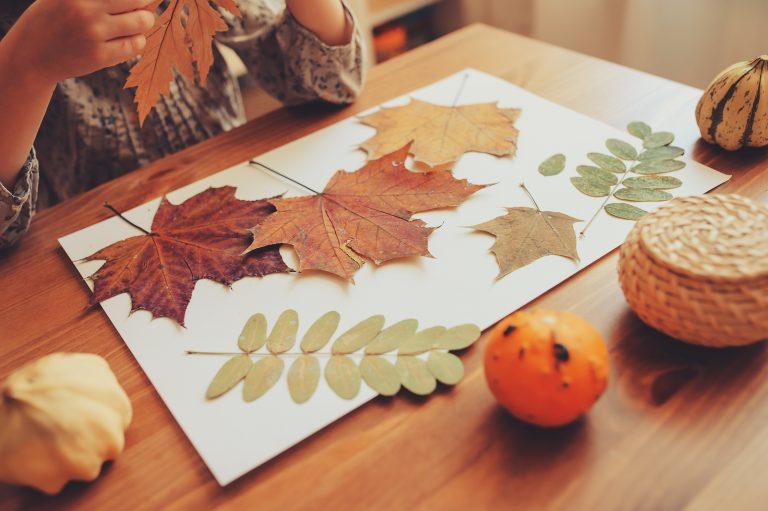 Name:  fall-crafts-768x511.jpg Views: 51 Size:  57.7 KB