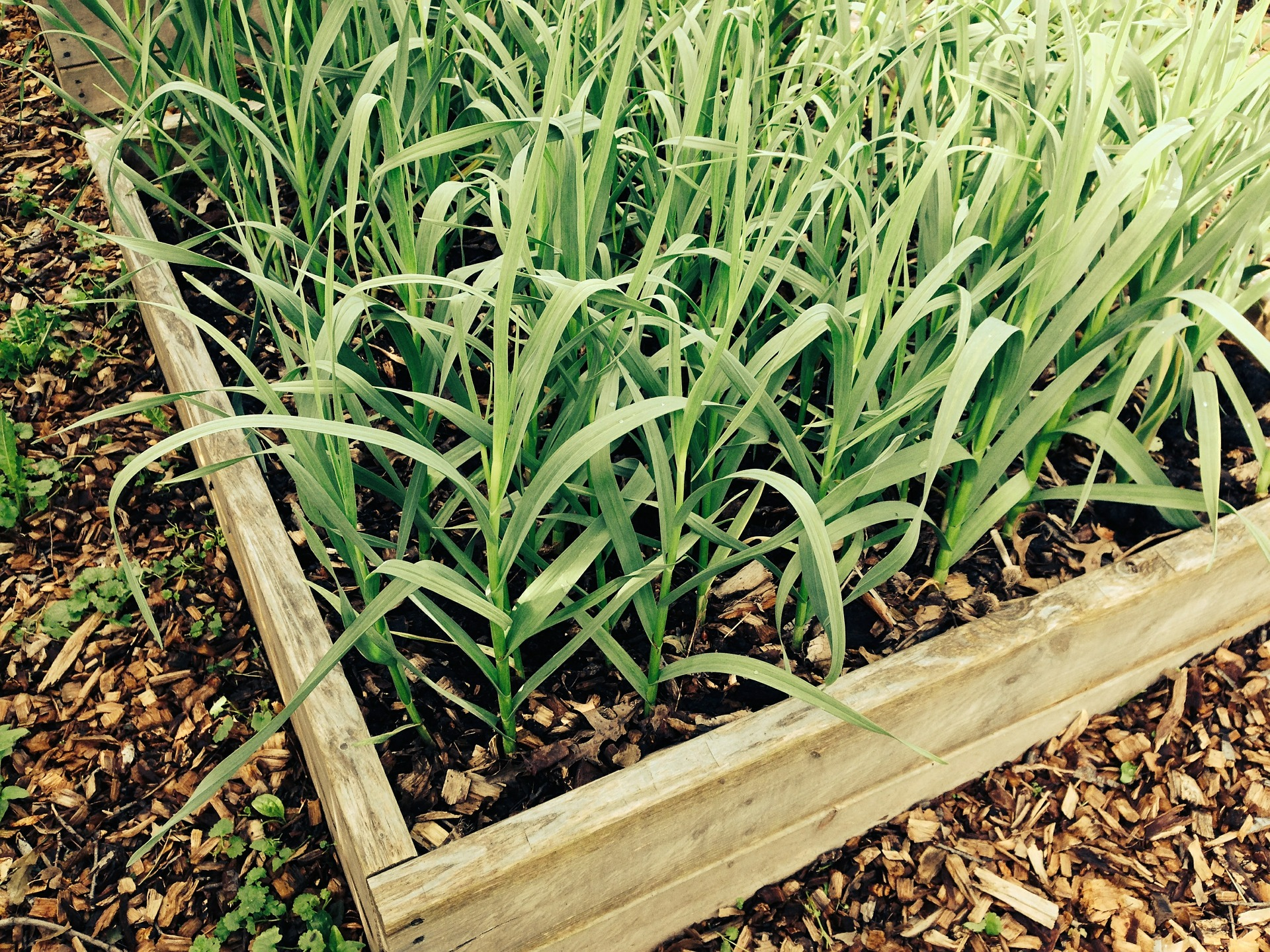 If you have the longing for homegrown produce, give raised beds a try.