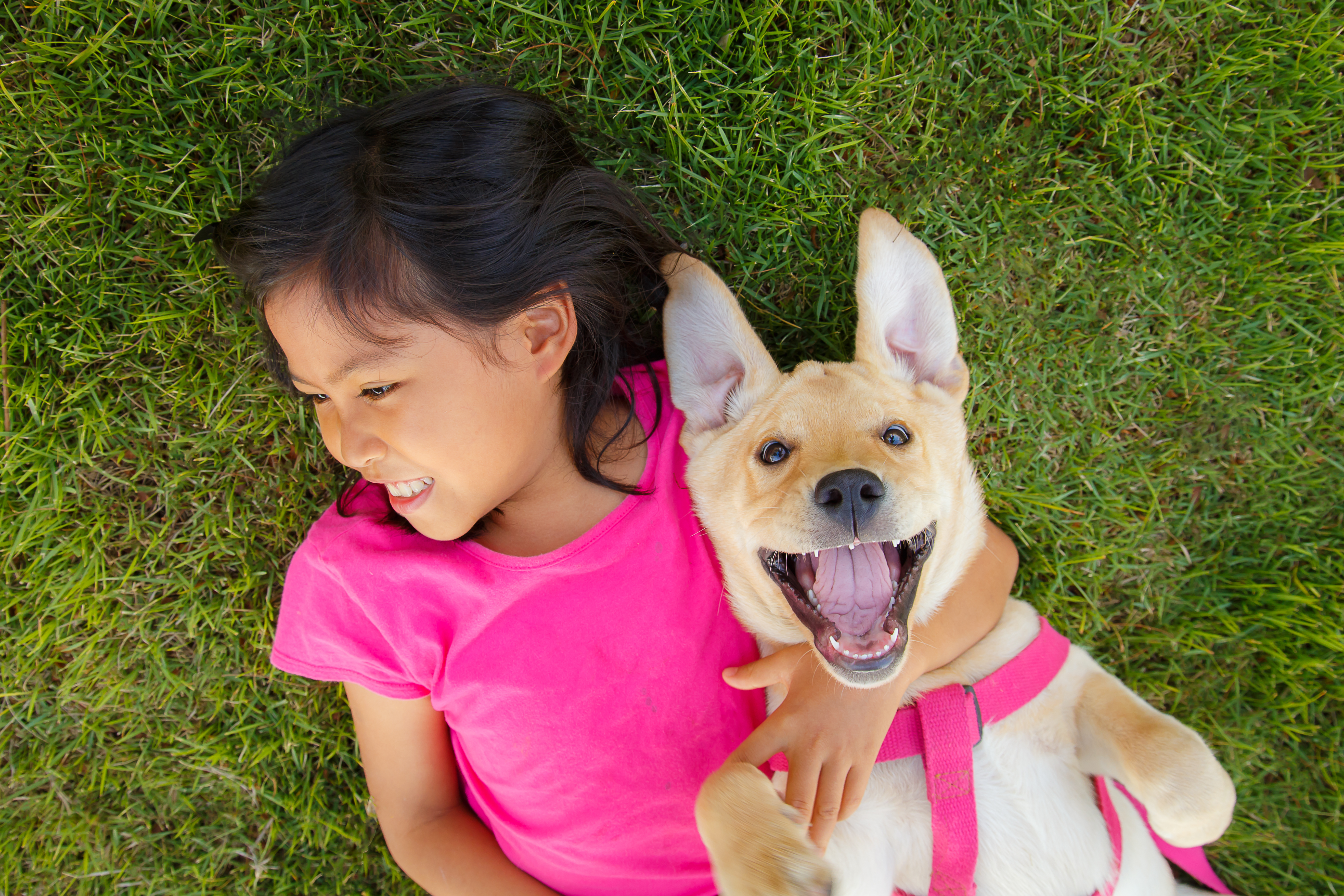 If you've been thinking of adding a pet to the family here, are things to consider.