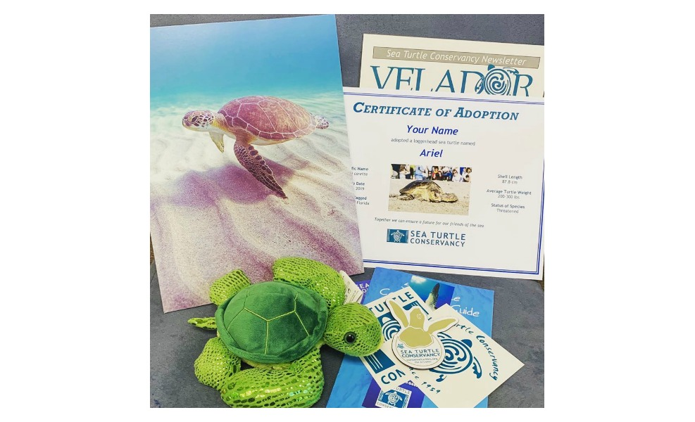 This adopt a turtle kit is a great way to give back