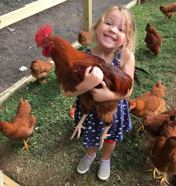 What the Cluck: The Joys of Keeping Backyard Chickens ...