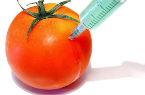 The Dangers of GMO Foods: A Likely Cause of Many of Today's Health Problems
