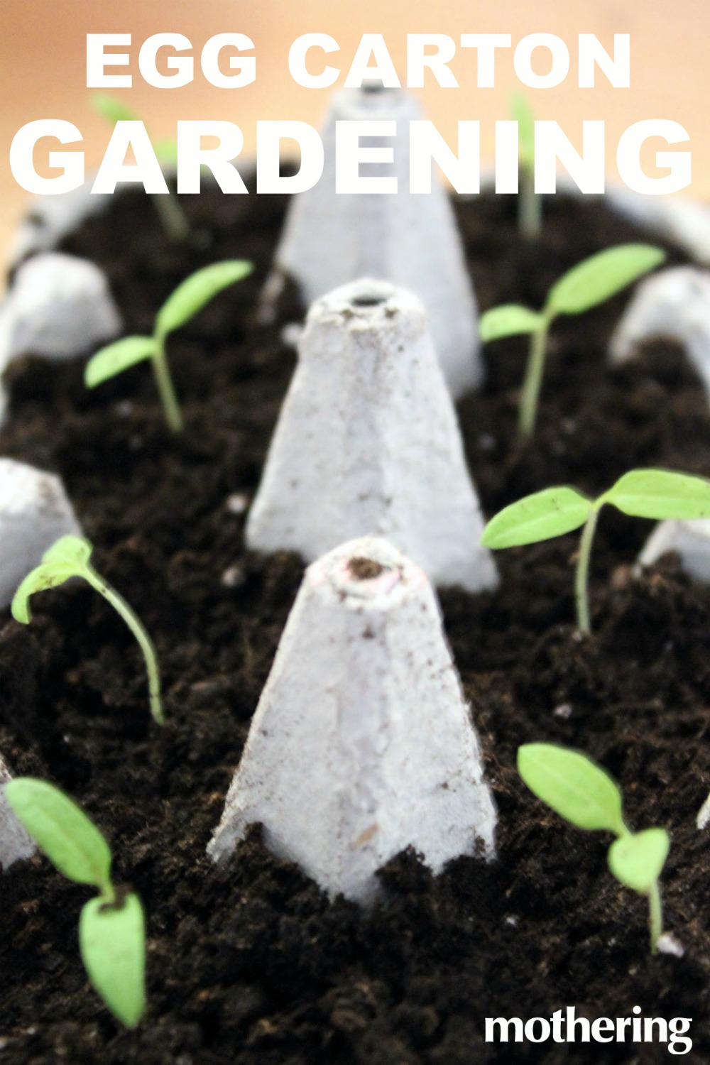 Here's how to grow seeds in a recycled egg carton!