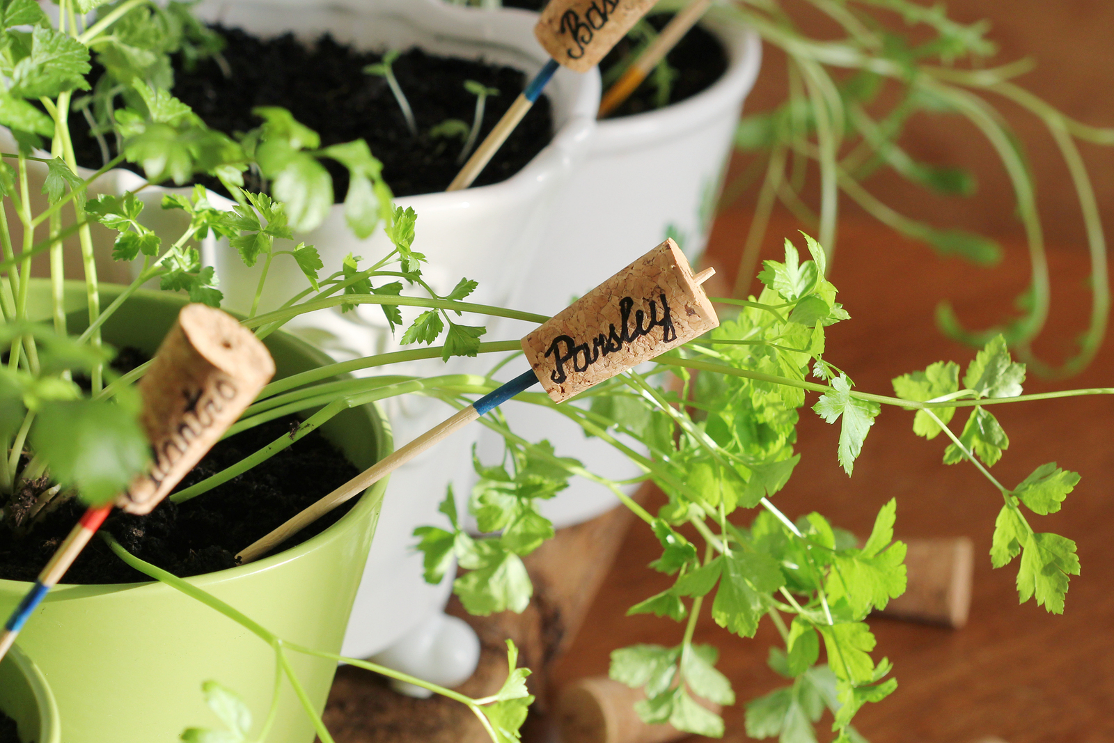 Here are five herbs that my family grows every year, and how we use them!
