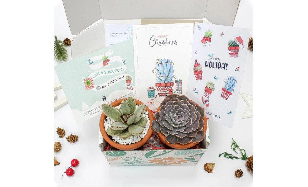Send succulents for the holidays