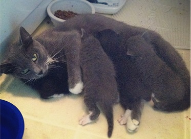Five Lessons for New Mamas from a Mama Cat