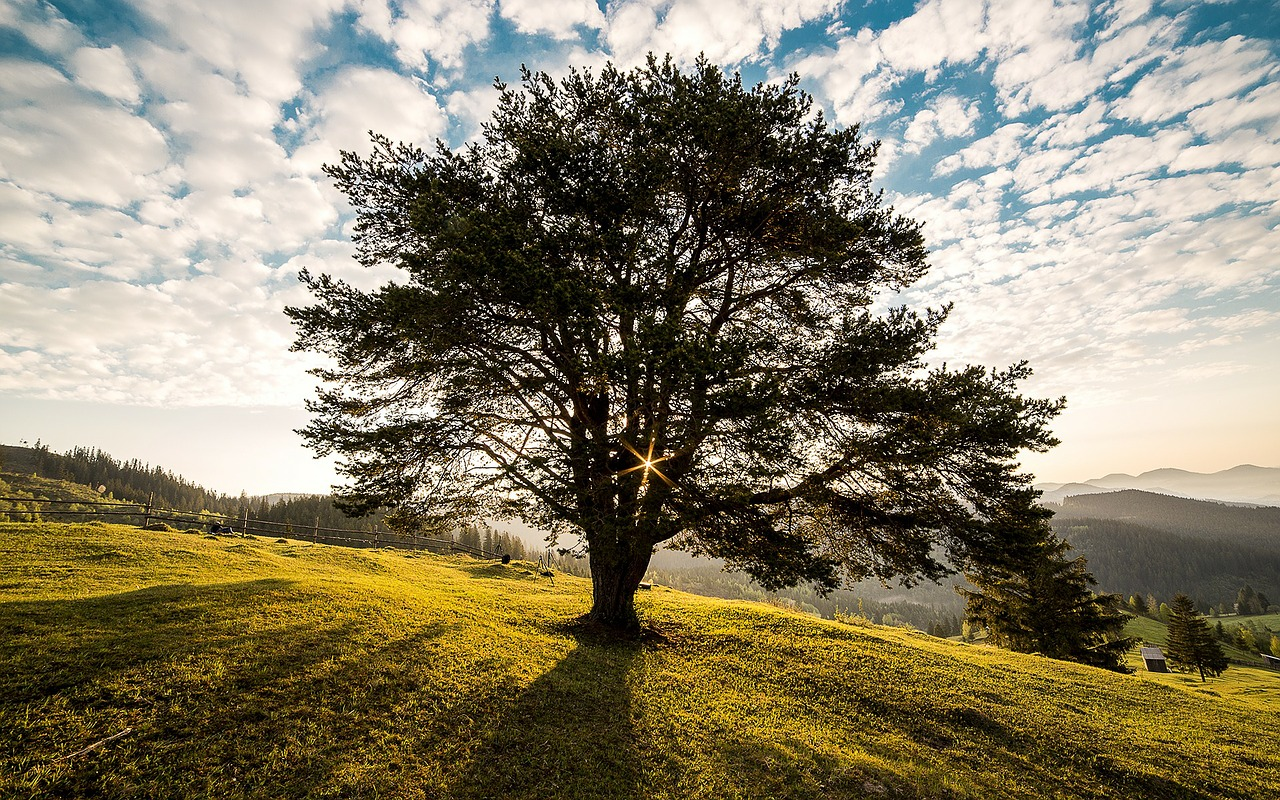9 Legendary Trees To Plant This Arbor Day