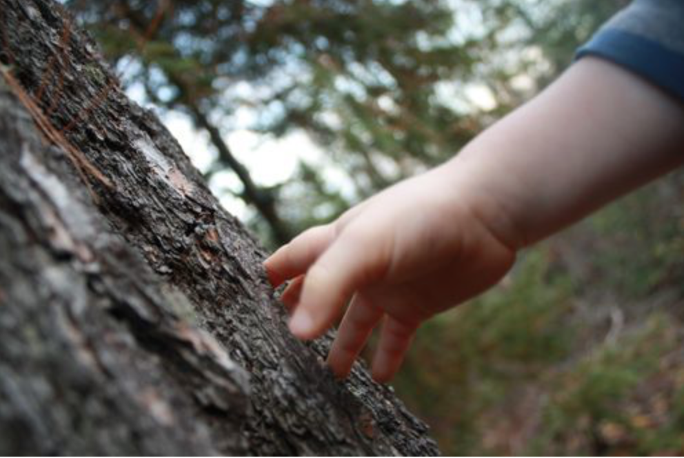 How to Practice Mindfulness Outdoors with Children