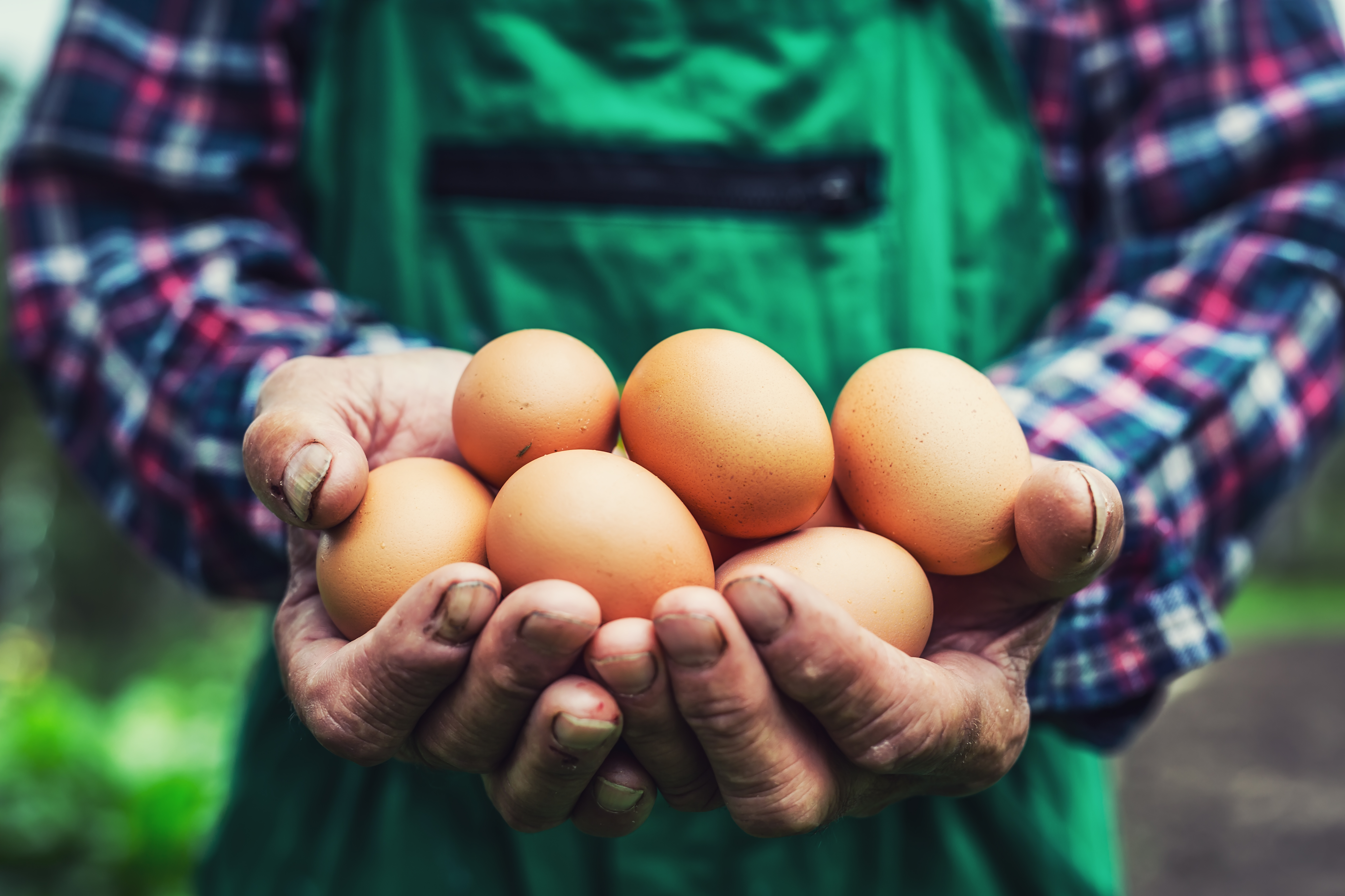 Organic farmers are fighting new plans to deregulate the organic egg industry.