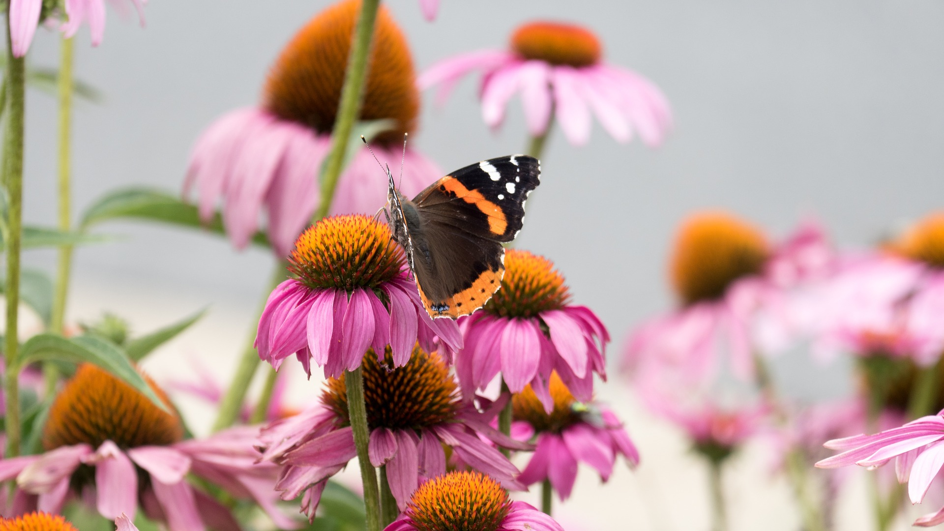 A pollinator garden will expose your child to the wonders of nature.