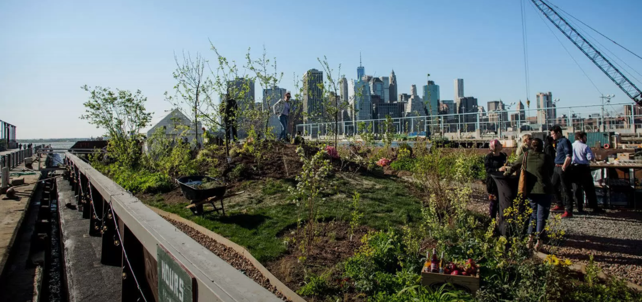 Swale, a floating garden, gives New York children the opportunity to learn about gardening through hands-on experiences.